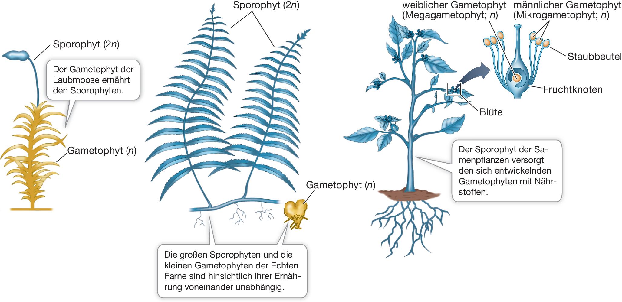 Fach Naturwissenschaften Thema Samenpflanzen 15