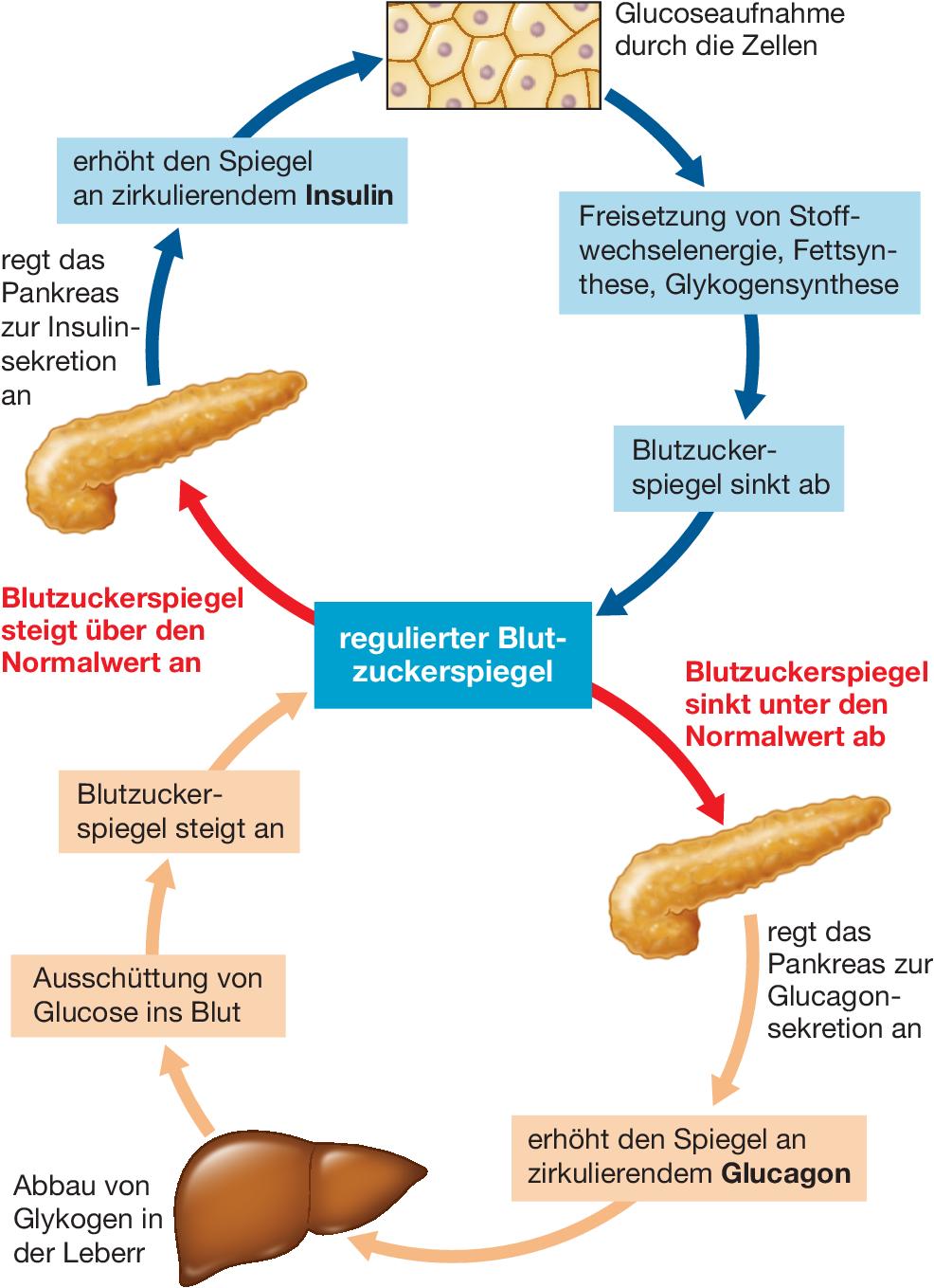 Ernährung Verdauung Und Resorption Springerlink