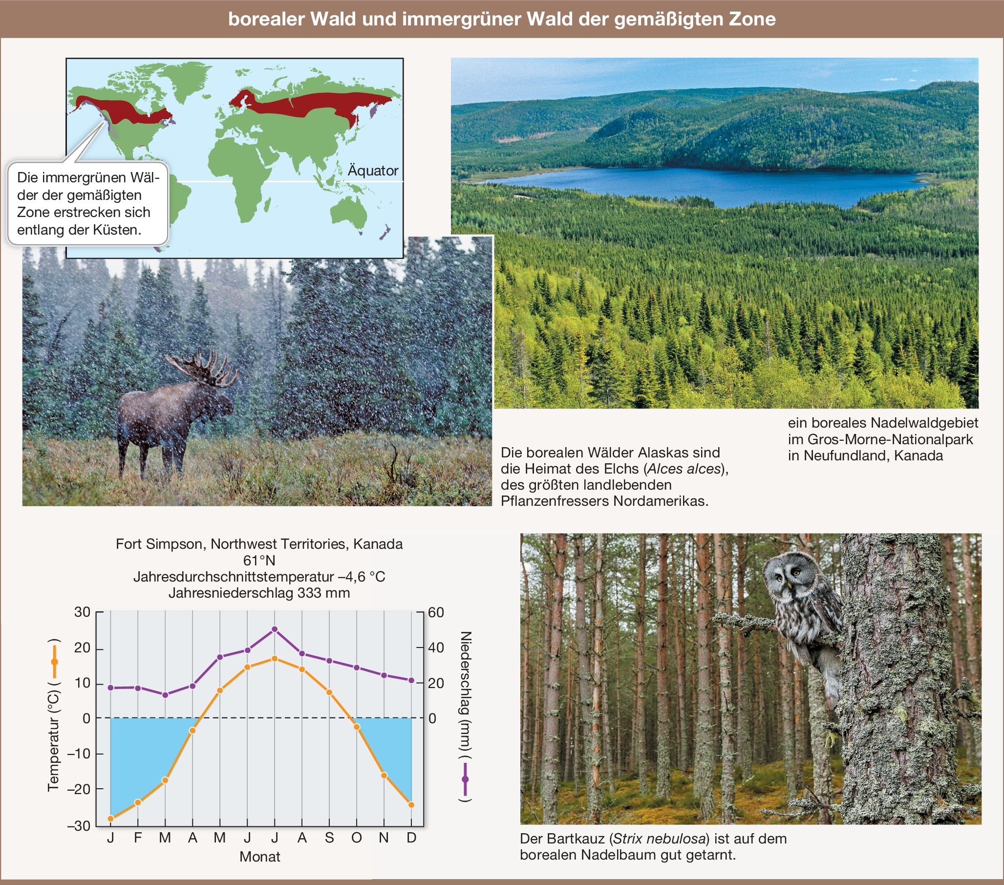Geschwindigkeit aus den Wäldern tx