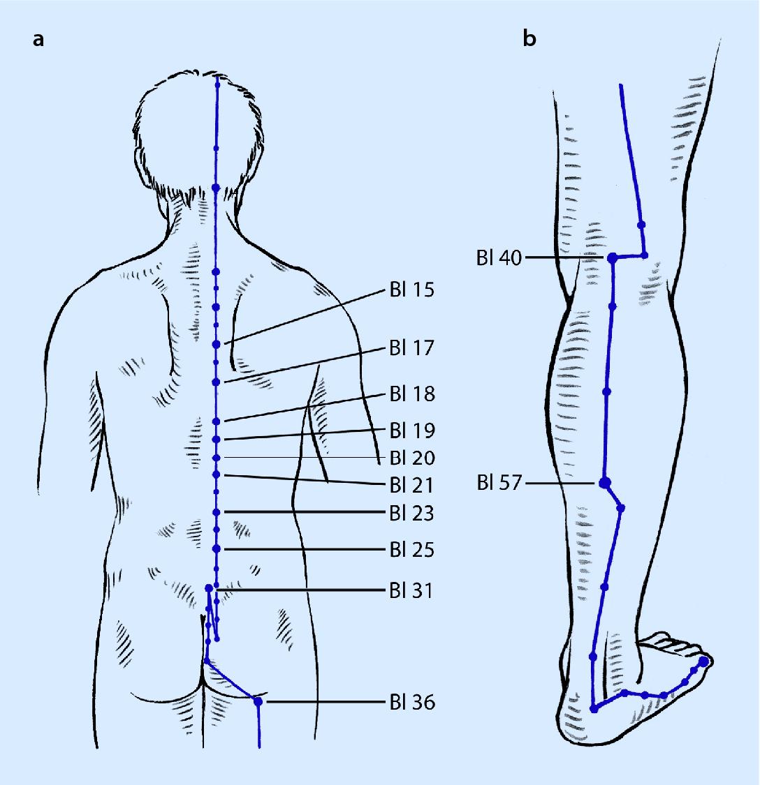 akupunktur springerlink  vorsicht harnblase ein sensibles organ #12