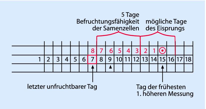 Spinnbarer zervixschleim 6 es Zervixschleim •