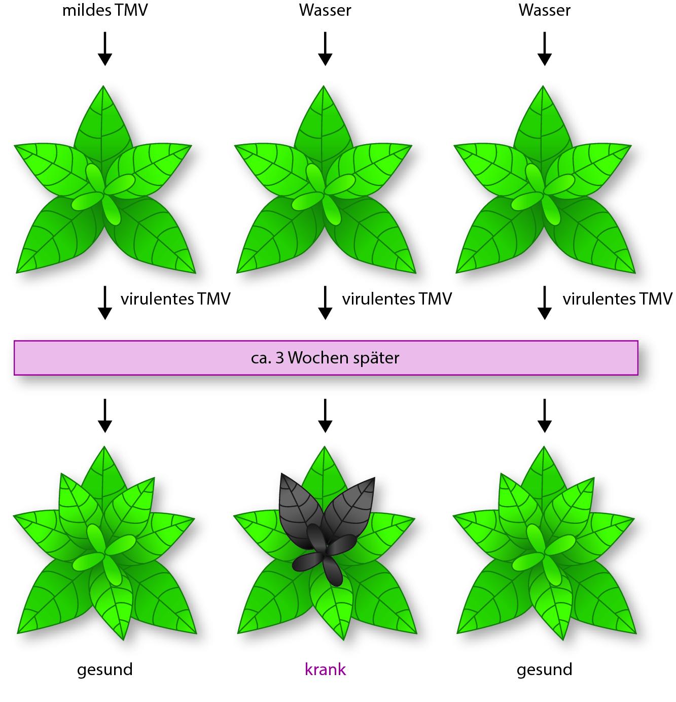 Rebe zum Schutz von Pflanzen Unterstützung für Saatgut Clips für Grafik