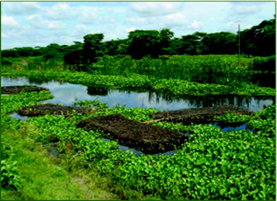 Agriculture Adaptation in Coastal Zone of Bangladesh
