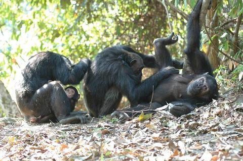 Geher 2007 parental investment in primates impavidus investment group llc