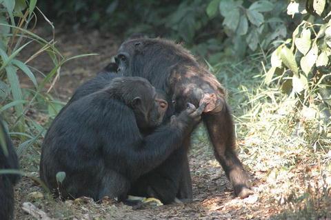 geher 2007 parental investment in primates