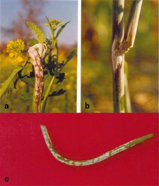 The disease springerlink open image in new window fandeluxe Gallery