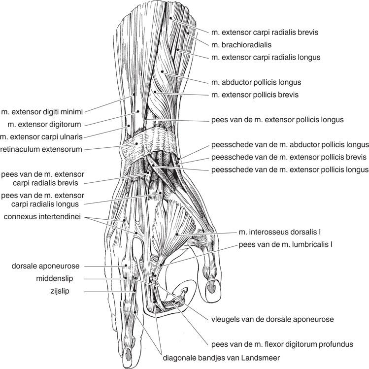 32 Hand en vingers | SpringerLink