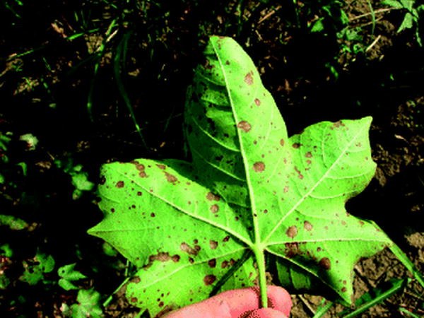 Role of Nutrients in Controlling Plant Diseases in