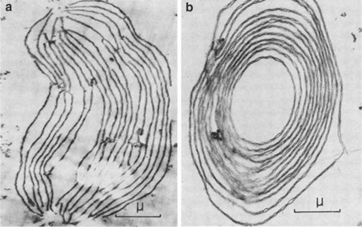 Architecture Of Thylakoid Membrane Networks Springerlink There Is Aggressive Research Going On To Utilize Chloroplasts As A Open Image In New Window