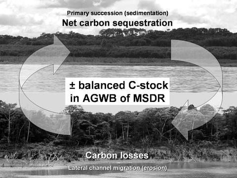 Biomass and net primary production of central amazonian floodplain open image in new window fandeluxe Images