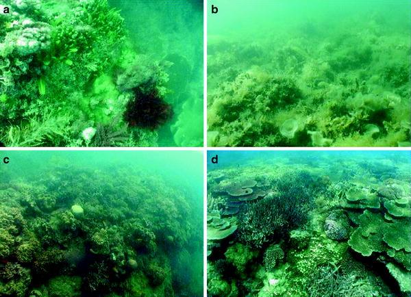 beste prijzen beste plaats popul Factors Determining the Resilience of Coral Reefs to ...
