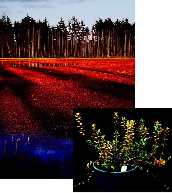 Long Term Anoxia Tolerance In Flowering Plants Springerlink