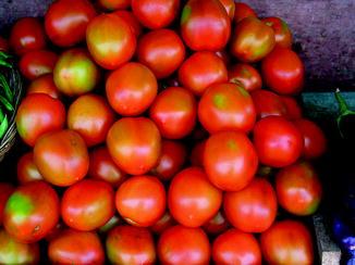 1 Pack 200 Tomato Seed Red Tomato Lycopersicon Esculentum Organic S003