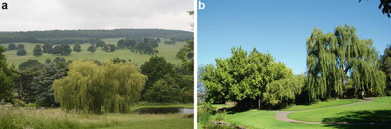 Patterns And Trends In Urban Biodiversity And Landscape Design