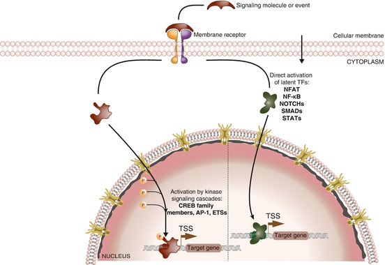 Linking Signal Transduction and Gene Regulation | SpringerLink on gene drawing, gene testing, gene editing, gene concept map, gene technology, gene science, gene biology, gene identification, gene cloning, gene linkage,