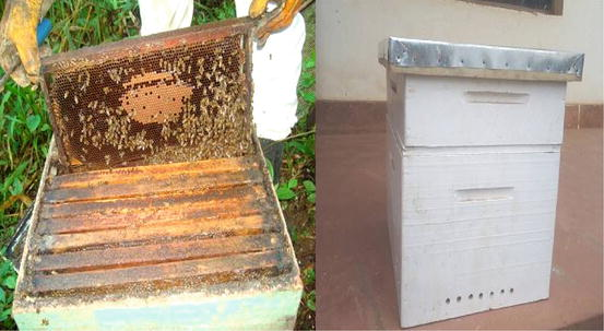 Manufacturing of hives by own hands: the sizes, drawings. The technology of manufacturing beehives from expanded polystyrene at home