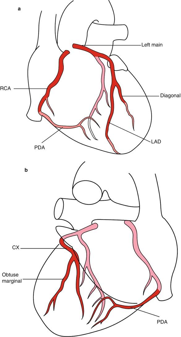 The Coronary Artery | SpringerLink