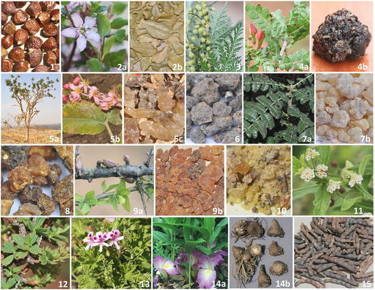 A Review of African Medicinal and Aromatic Plants | SpringerLink