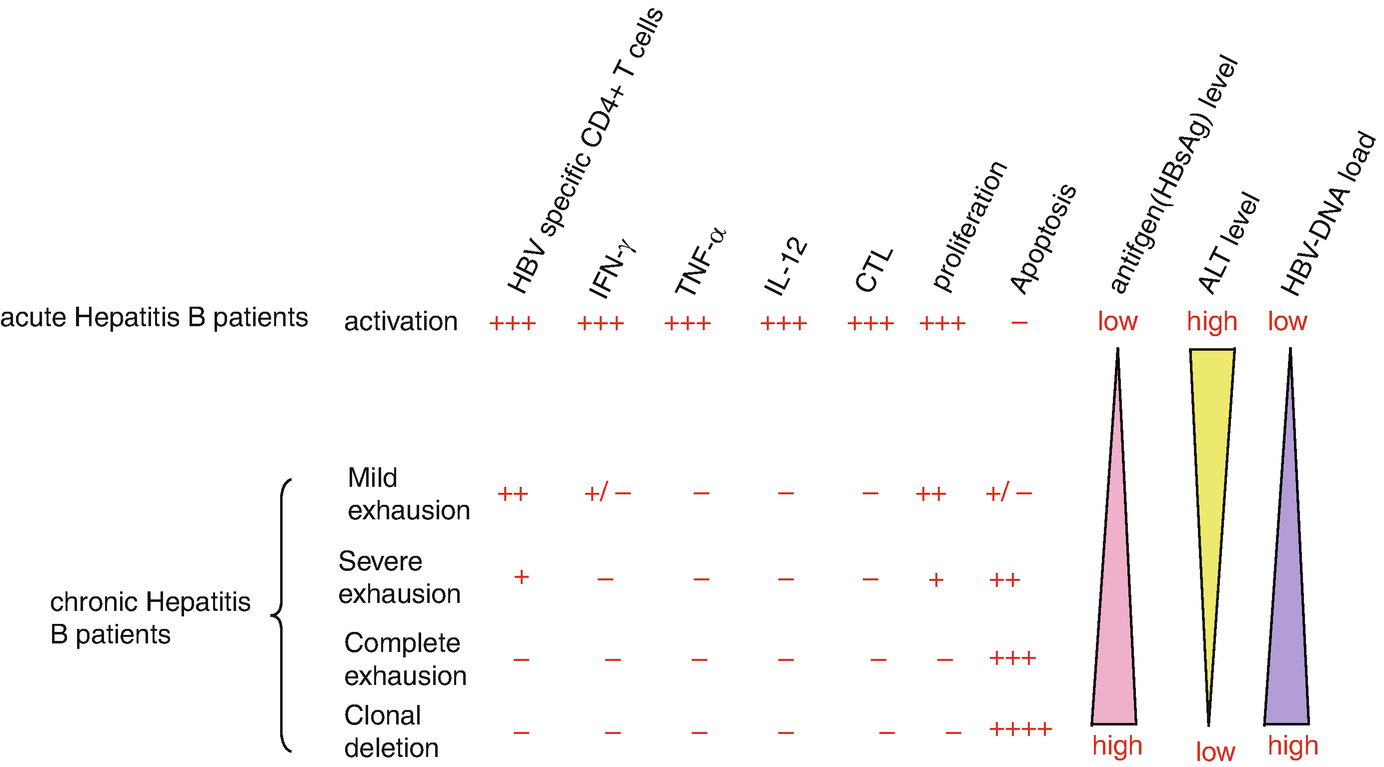 Immunological Features of AECHB | SpringerLink