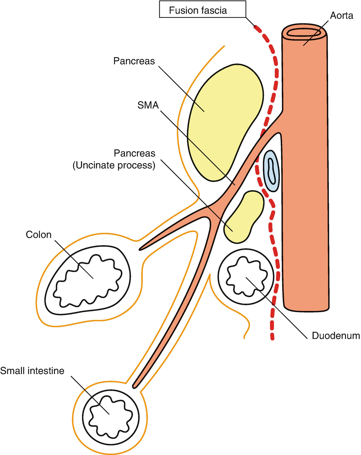 Surgical Anatomy of the Pancreas and the Periampullary Region ...