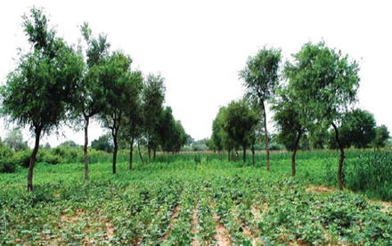 Agroforestry for Increasing Farm Productivity in Water