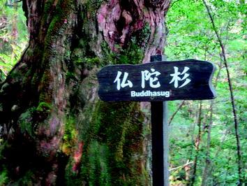 Yakushima Japan Sustainable Forest Management Springerlink