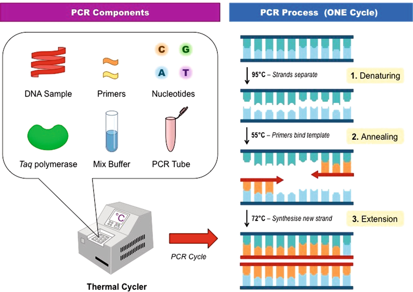 how much template dna for pcr.html