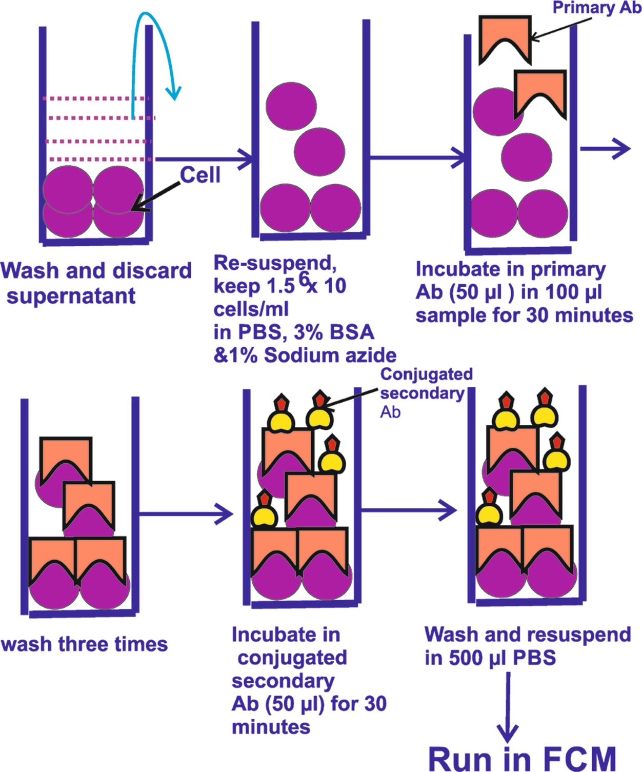 Flow Cytometry: Basic Principles, Procedure and Applications