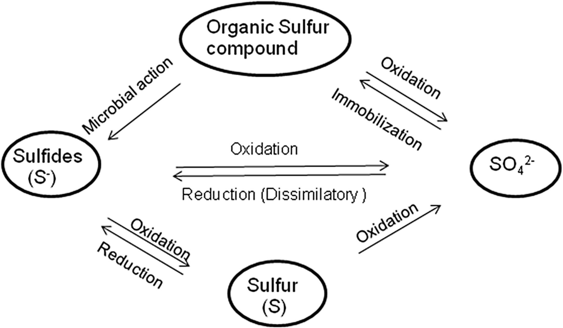Microbial Transformation of Sulphur: An Approach to Combat