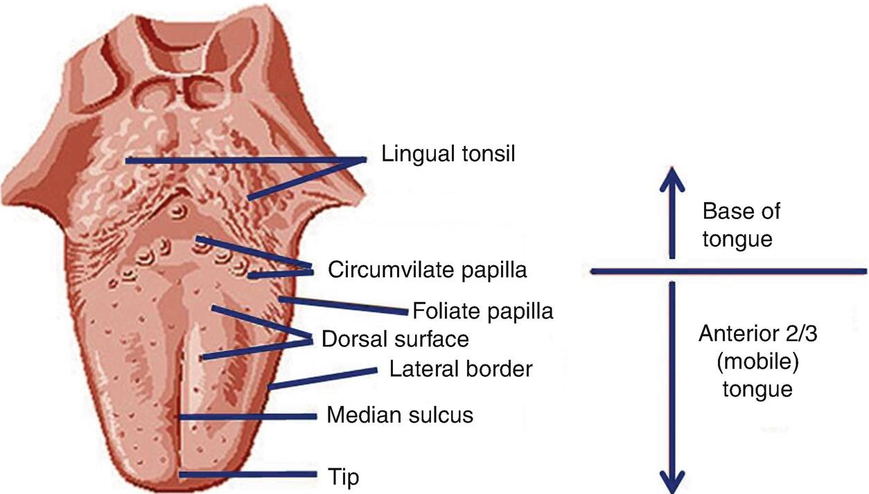 Labiolingual Diseases   SpringerLink
