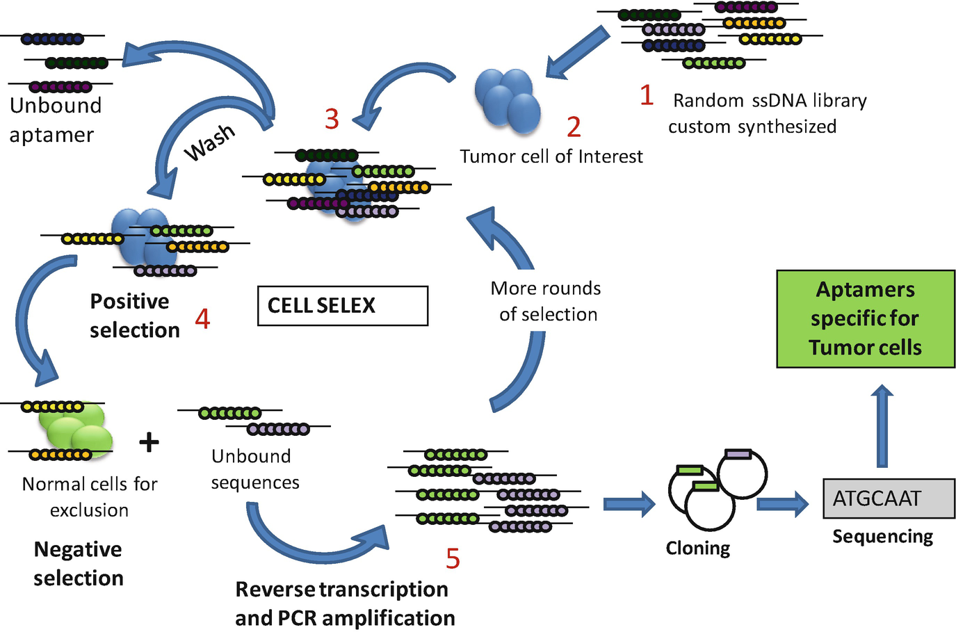Aptamer as Therapeutics for Cancer with Focus on