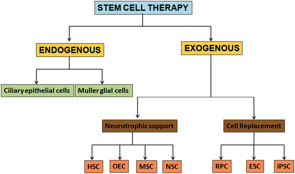 Hope or Hype: Stem Cells as Therapeutics in Retinal
