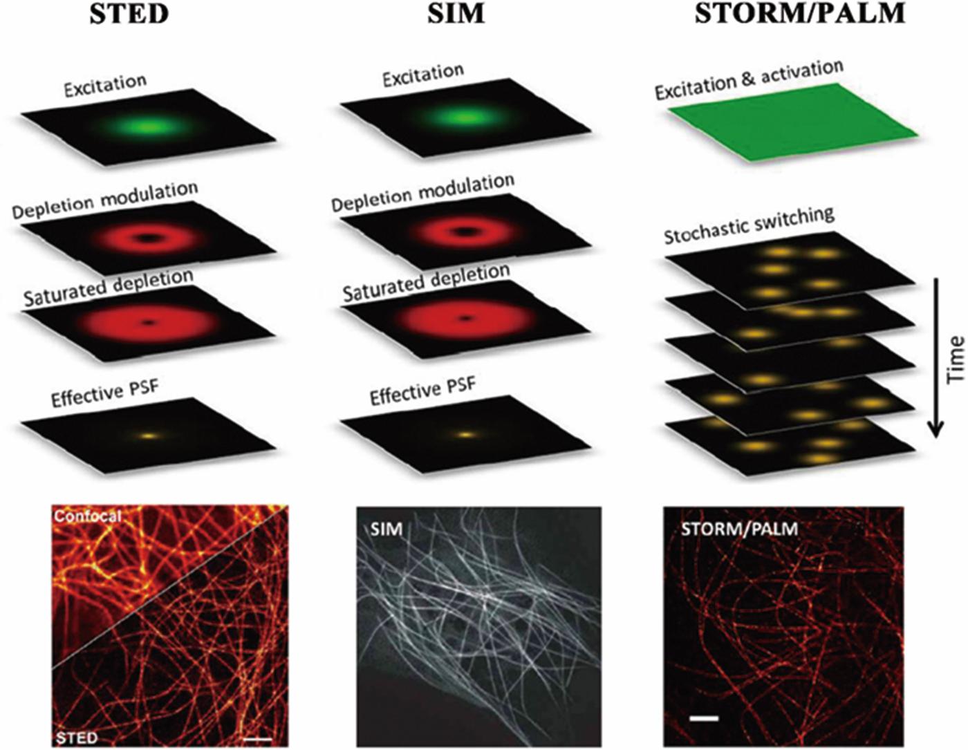 Super-Resolution Fluorescence Microscopy for Single Cell