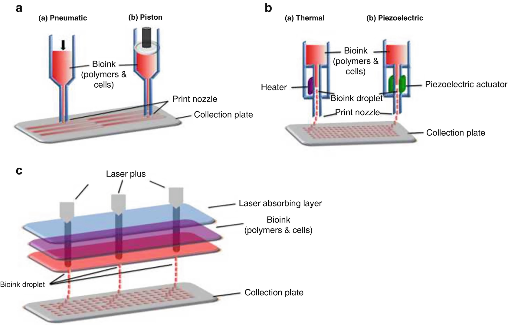 3D Bioprinting of Adipose-Derived Stem Cells for Organ Manufacturing