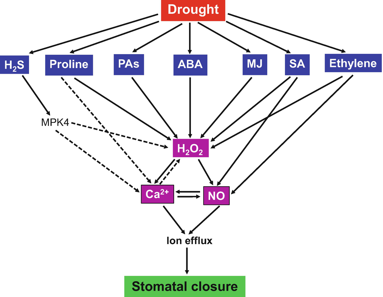Mechanism of Stomatal Closure in Plants Exposed to Drought and Cold