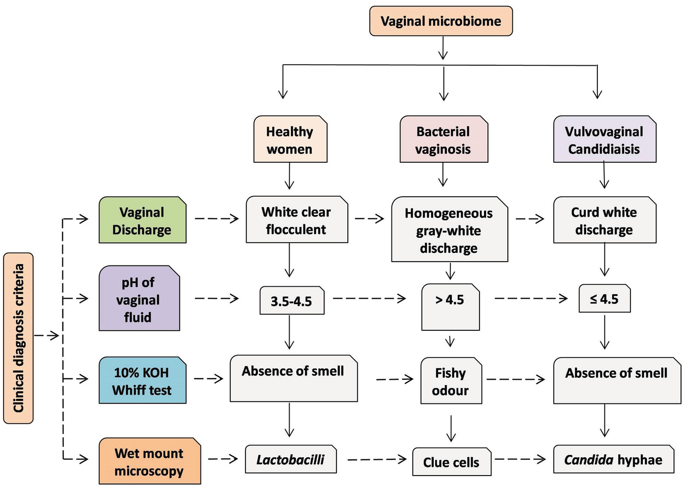 Recurrent Vulvovaginal Infections: Etiology, Diagnosis, Treatment