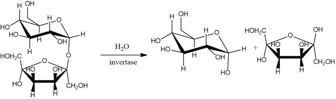 Invertase: An Enzyme with Importance in Confectionery Food Industry | SpringerLink