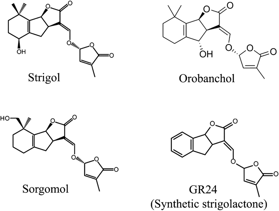 Recently Discovered Plant Growth Regulators