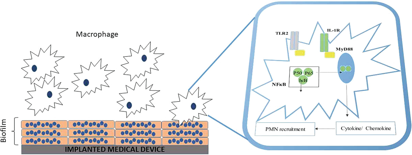 Cellular Signaling in Bacterial Biofilms | SpringerLink