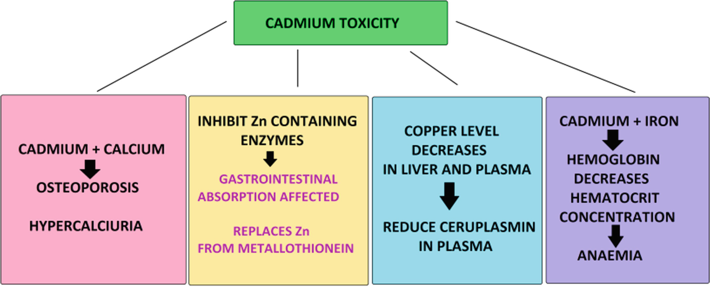Toxic Metals in Industrial Wastewaters and Phytoremediation