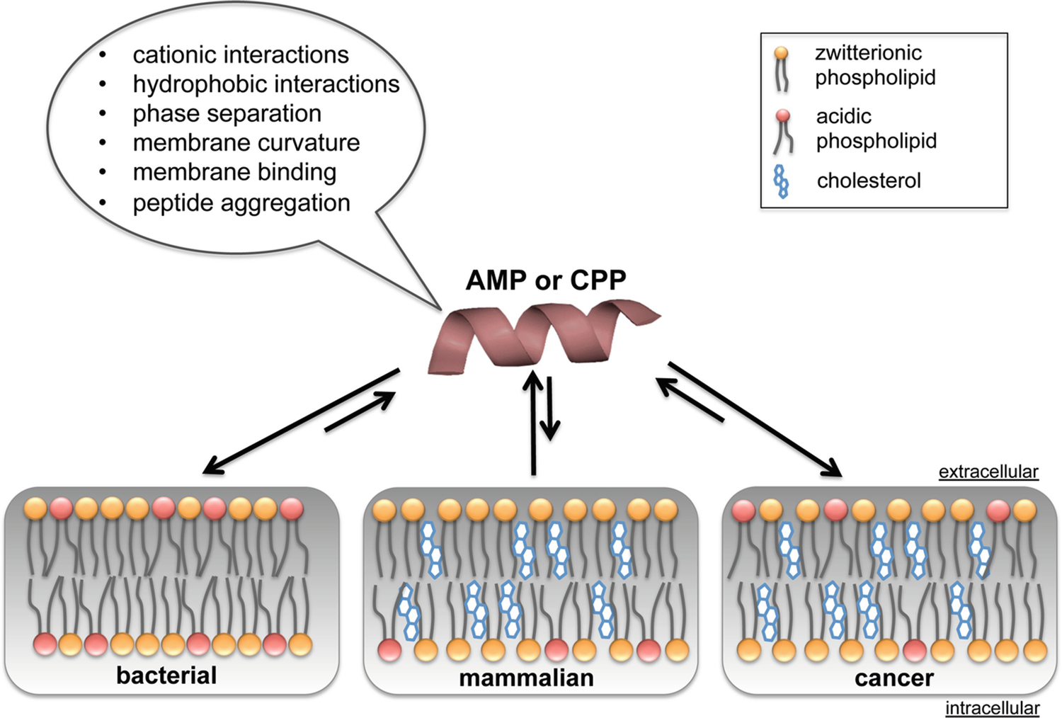 Antimicrobial and Cell-Penetrating Peptides: How to Understand Two