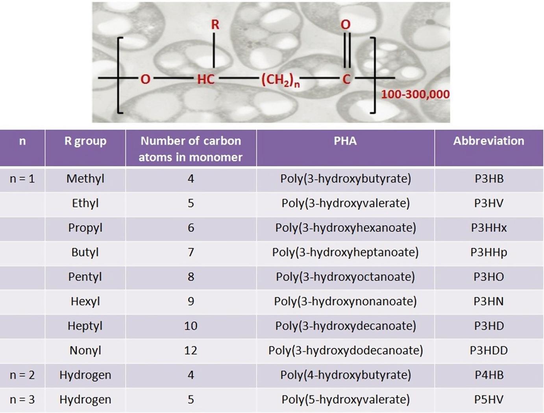 Polyhydroxyalkanoates in Packaging | SpringerLink