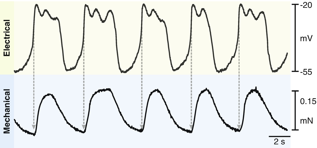 Myosalpinx Contractions Are Essential for Egg Transport
