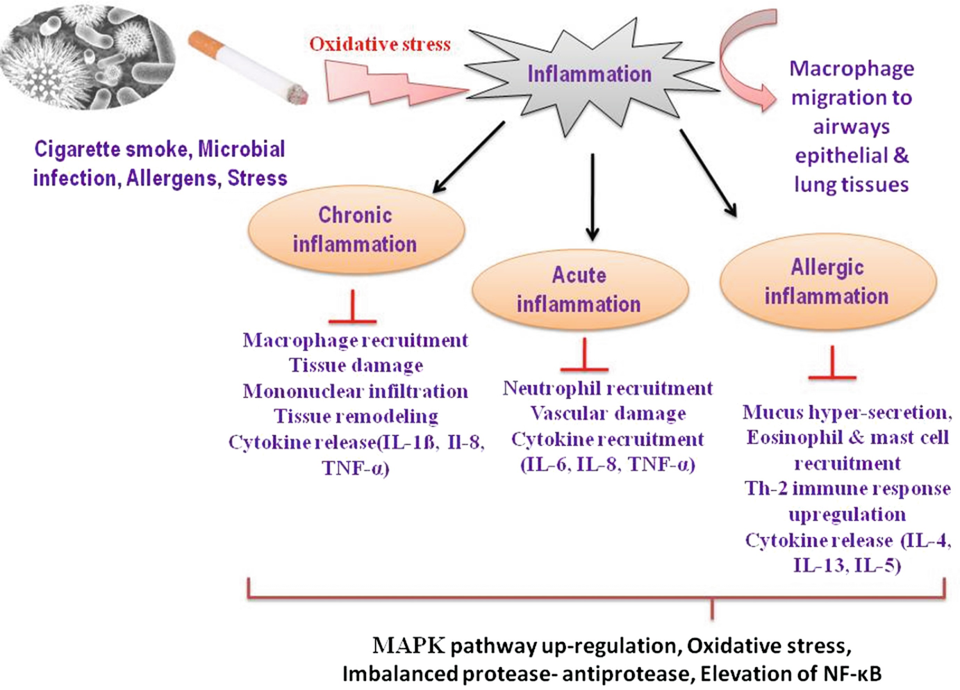 Phytotherapy in Inflammatory Lung Diseases: An Emerging