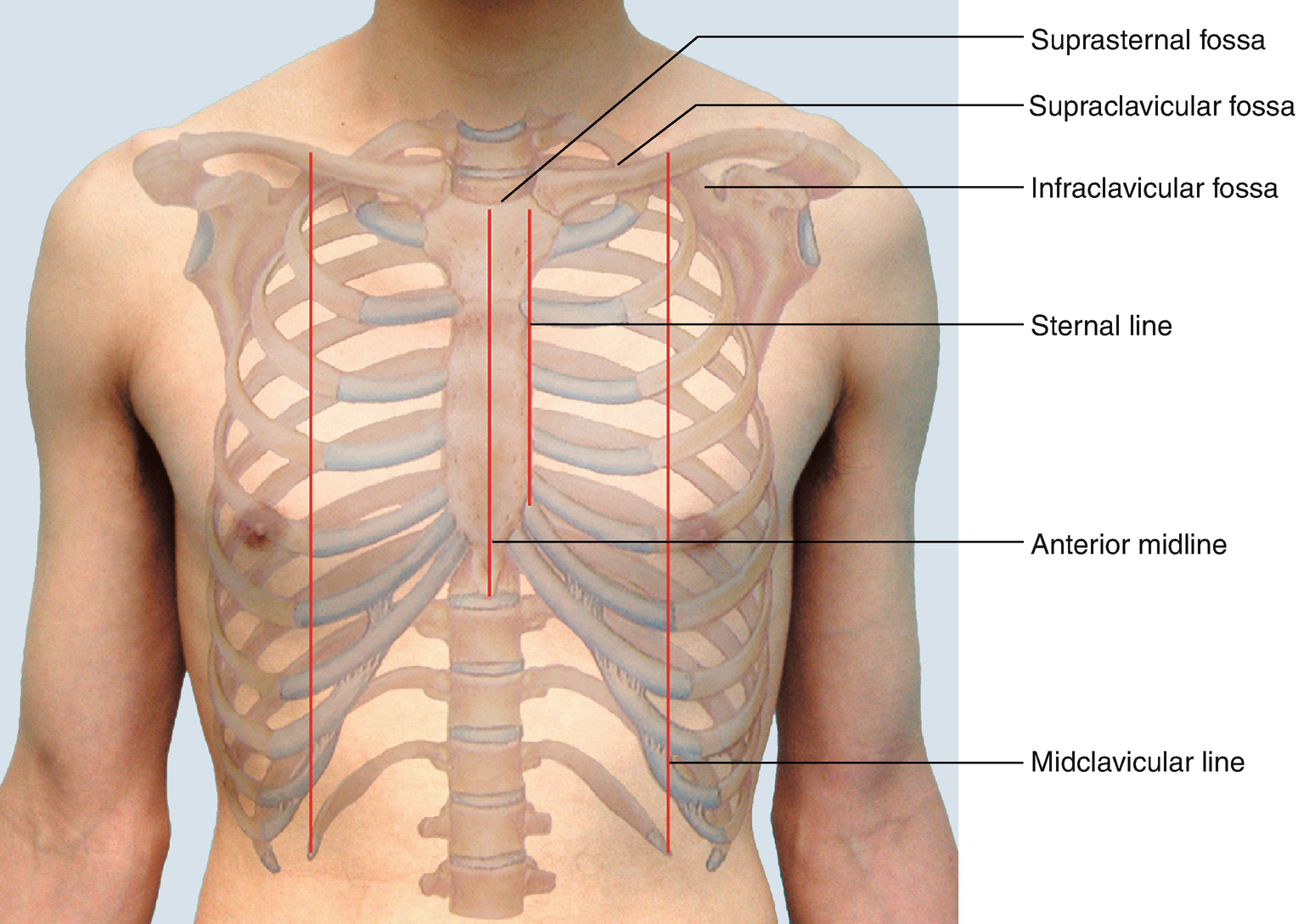 Physical Examination of Chest | SpringerLink