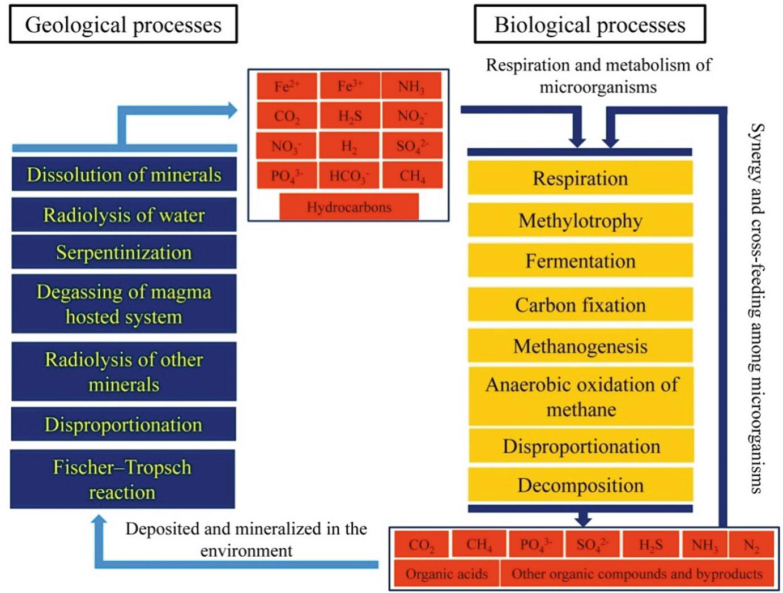 Deep Biosphere: Microbiome of the Deep Terrestrial Subsurface