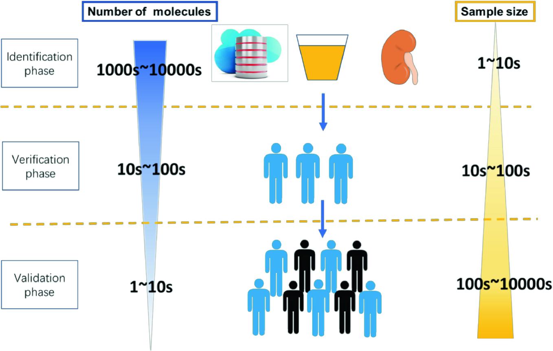 Urinary Biomarkers of Renal Fibrosis | SpringerLink