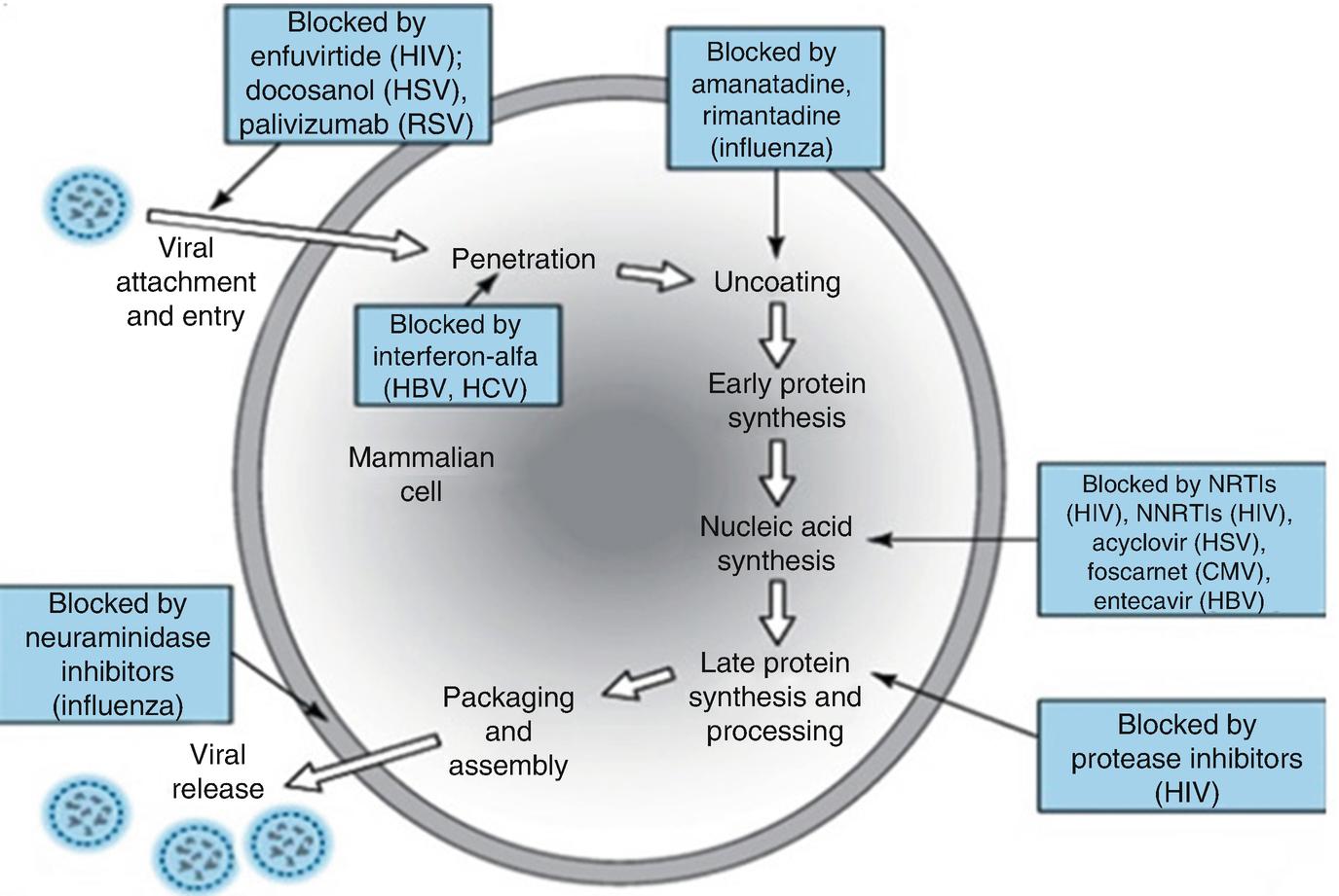 Antivirals: Past, Present and Future | SpringerLink