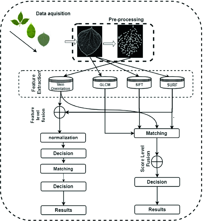 Evaluation and Analysis of Plant Classification System Based on