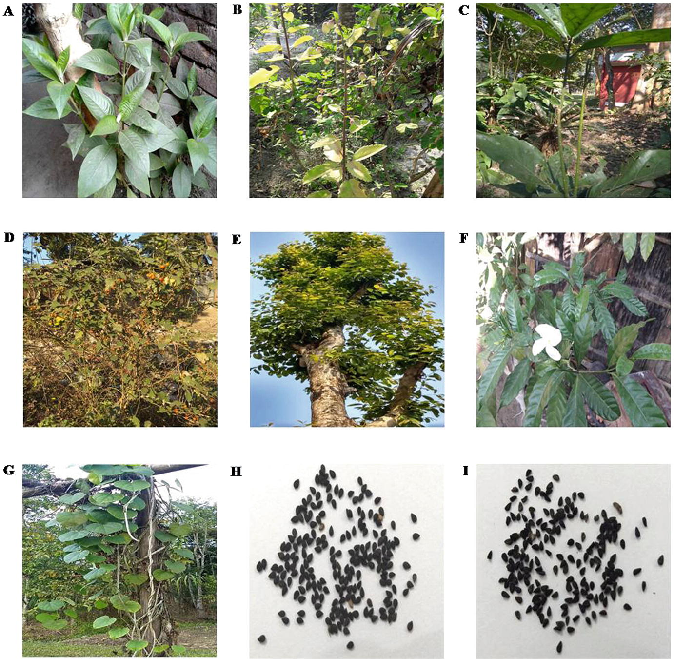 Ethnomedicinal Plants Of North East India As A Potential Target For Drug Discovery Against Type 2 Diabetes Mellitus Springerlink